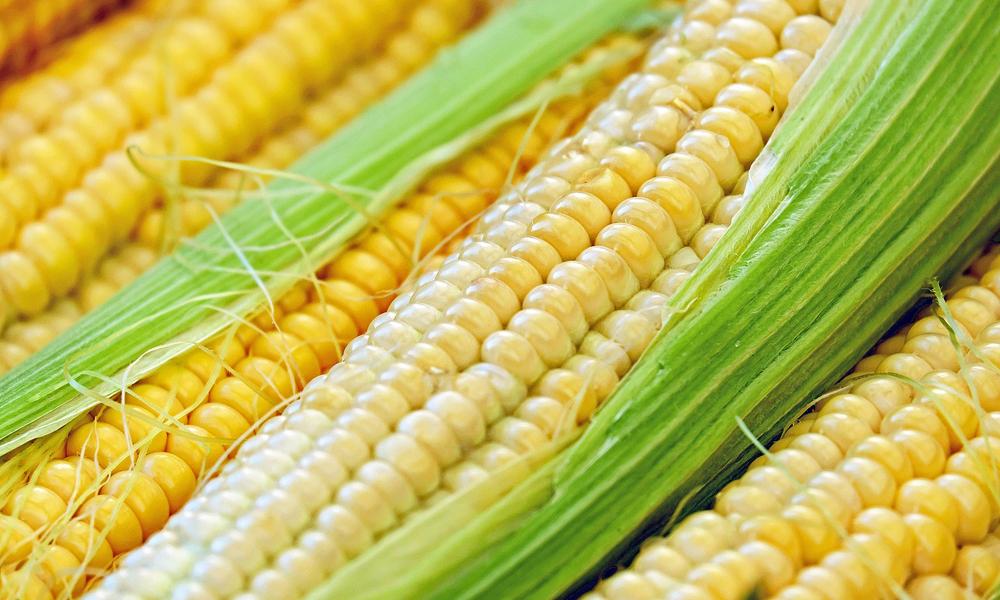 Sopa de maíz del templo