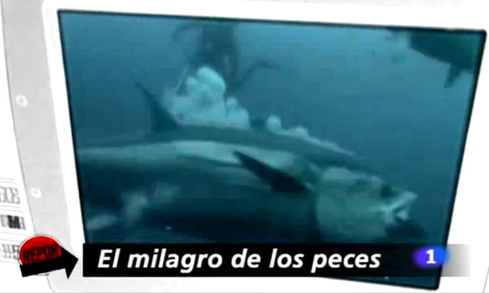 REPOR La 1 RTVE - El Milagro de los Peces