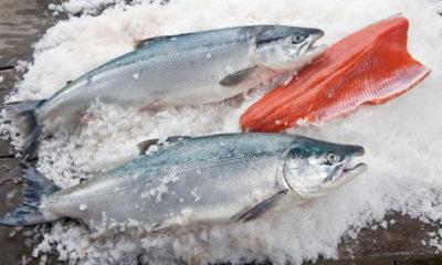 Salmón salvaje de Alaska