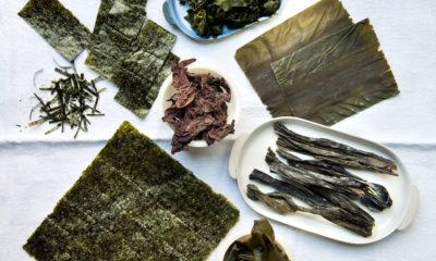tipos de algas